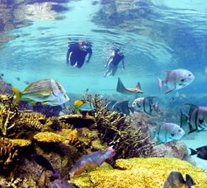 Old Bahama Bay Image 3