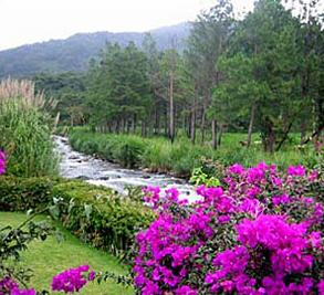 Boquete Plantation Image 3