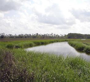 Chadwick Shores Plantation Image