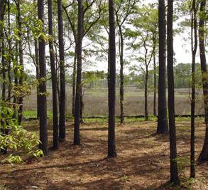 Chadwick Shores Plantation Image 3