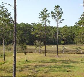 Chadwick Shores Plantation Image 4