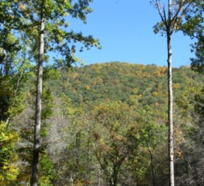 Balsam Mountain Preserve Image 7