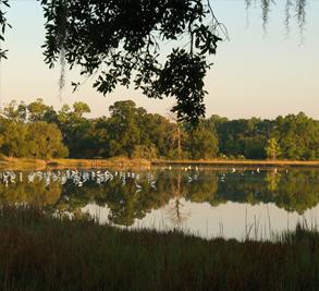 Brays Island Plantation Image 12