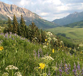 Crested Butte Image 4