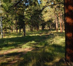 Brown Dog Ranch-McKeough Land Company Image 1