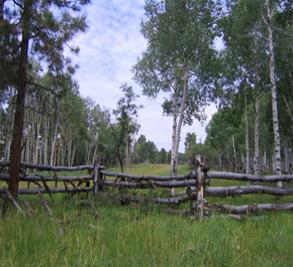 Brown Dog Ranch-McKeough Land Company Image 3