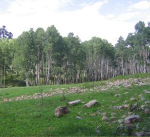 Brown Dog Ranch-McKeough Land Company Image 4