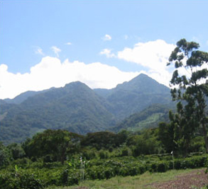 Boquete Plantation Image