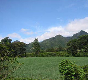 Boquete Plantation Image 1